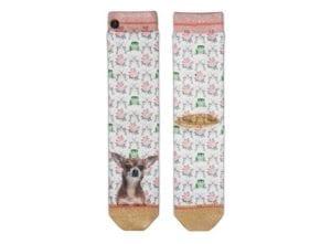 XP Chihuahua socks